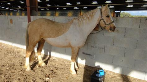 Beton Instan Type V Indokon couverture pour cheval tondu