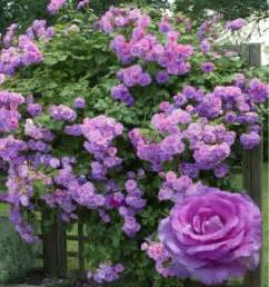 Fleur Violette Et Jaune