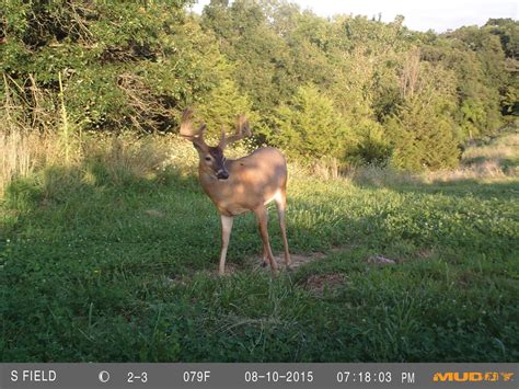 trail cam pro trail camera how to capture velvet bucks in spring and
