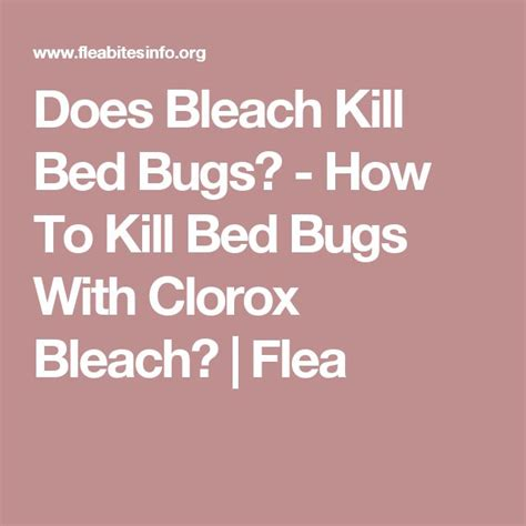 does bleach kill bed bugs 17 best ideas about killing bed bugs on pinterest what