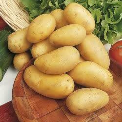 buy charlotte seed potatoes  marshalls seeds
