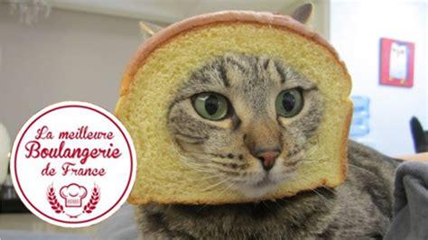 Cat Hits Glass Door Kaķis Tv šova Laikā Taranē Stikla Durvis A Cat Hit A