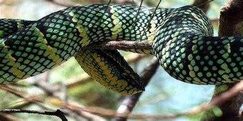 film ular berbisa kisah 5 ular berbisa penjaga setia rumah soekarno