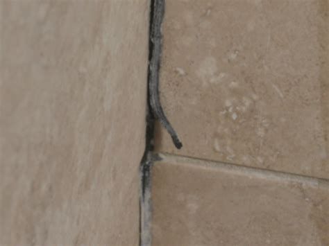 Black Mold In Shower Grout black mold strachybotrys atra and travertine tile