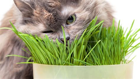 common plants  poisonous  cats healthy cats animal planet