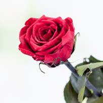imagenes de rosas turquesas flores rosas flores a domicilio rosas personalizadas