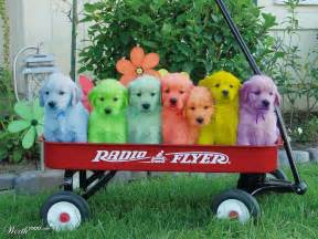 colored dogs rainbow worth1000 contests