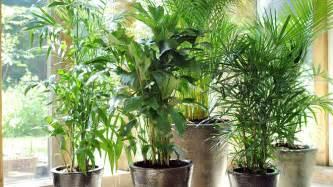 des conseils pour les plantations int 233 rieures bricobistro