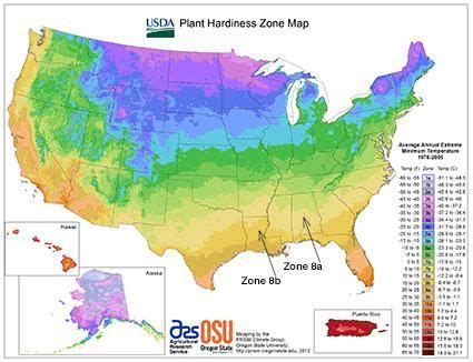 gardening in zone 8 usda plant hardiness zone map flowers gardens