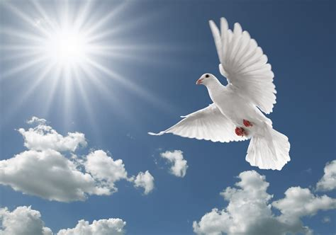 doves hd wallpaper 557370 jpg flying birds wallpaper hd 11674 amazing wallpaperz