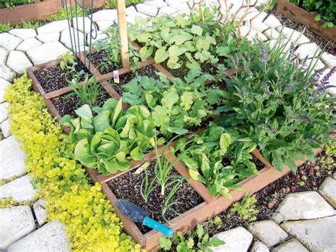 Should I Use Peat Moss In My Vegetable Garden Fasci Garden When Should I Water My Vegetable Garden