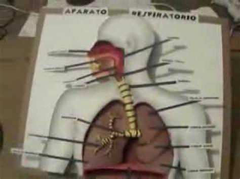 youtobe videos cmo nacer maqueta sistema respiratorio aparato respiratorio maqueta youtube