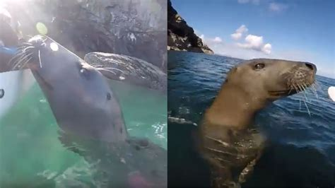 Jsy Bt 9783 Tf the moment a friendly seal tried to climb onto a kayak near the isle of bailiwick
