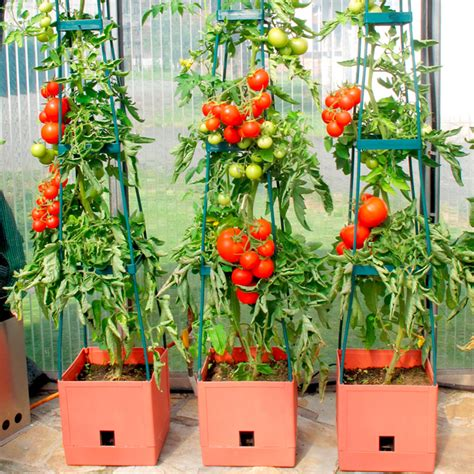 best self watering tomato planters