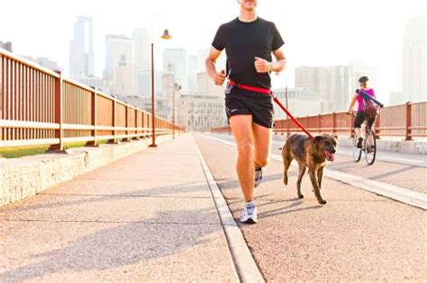 best leash for running 5 best leash picks for running updated 2017 review