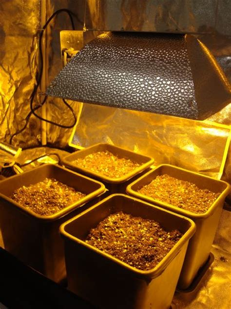 lada per fioritura lade a led per grow room lade coltivazione indoor
