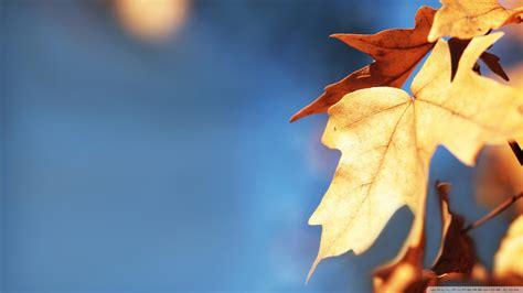 Leaf Fell Me Blue fall foliage against the blue sky wallpaper 1920x1080 wallpoper 450925