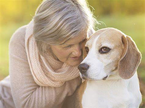 how to your for pet therapy pet therapy for the elderly your ultimate guide caring