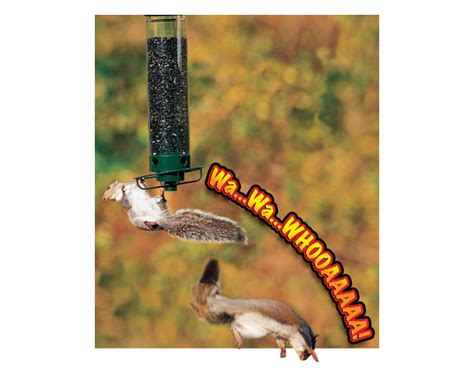 droll yankees yf flipper 4 port hanging bird backyard