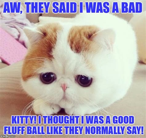 Bad Kitty Meme - sad cat imgflip