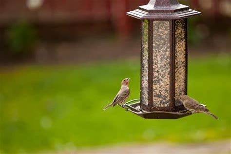 do squirrels eat nyjer seed how to keep squirrels away from bird feeders