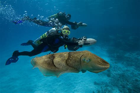Kaos Diving Padi 2 my top five reasons to become a padi master scuba diver