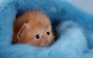 Baby Pics Of Kittens » Home Design 2017