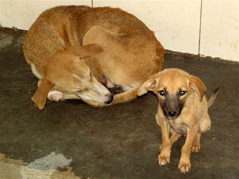 arl dogs prosecute who sold rescue dogs to be eaten forcechange