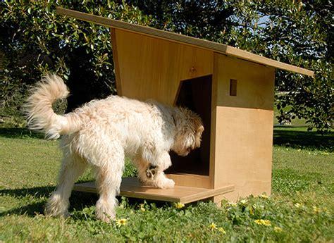 burkes backyard dogs 80 burkes backyard dogs people exaggerate and build