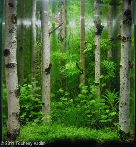 Aquascape Forest by Birch Forest Aquascape Aquarium Aquascaping Paludariums