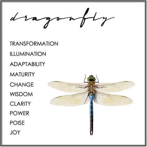 what does a dragon tattoo mean dragonfly symbolism symbolism dragonflies