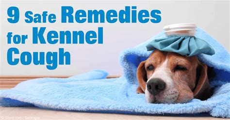 coughing treatment image gallery kennel cough