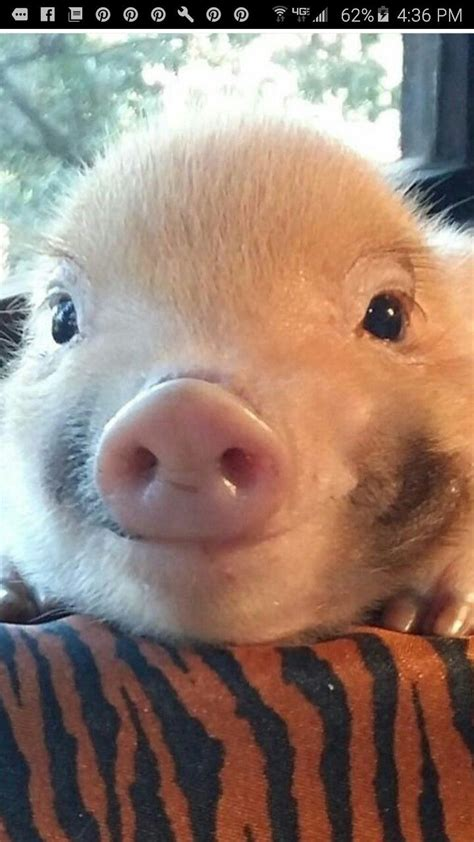 1000  ideas about Smiling Animals on Pinterest   Happy