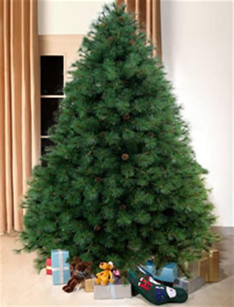 scottish fir green christmas tree 8ft tall artificial
