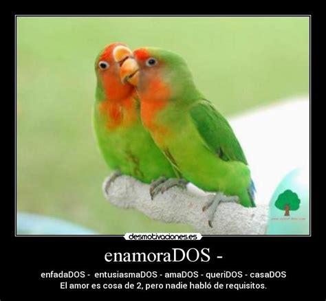 imagenes de animales enamorados enamorados desmotivaciones