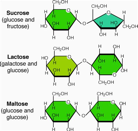 sucrose structural diagram 3 different types of carbohydrates monosaccharides