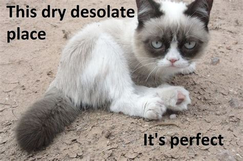Angry Cat Meme Good - tard the angry cat funny quot tard the grumpy cat quot pics and
