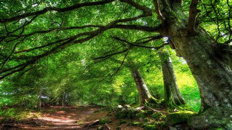 background hutan perfect view s wallpaper 1920x1200 31295