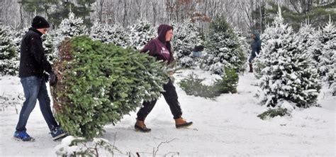 cut down christmas tree in utah central maine tree farmers in peak of season centralmaine