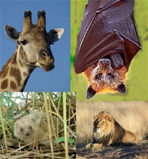 imagenes de animales rumiantes concepto de mam 237 feros definici 243 n en deconceptos com
