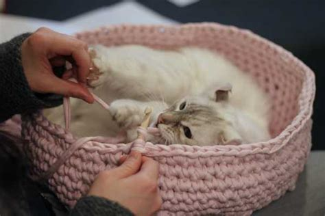 pattern for cat house cute and cuddle crochet cat cave