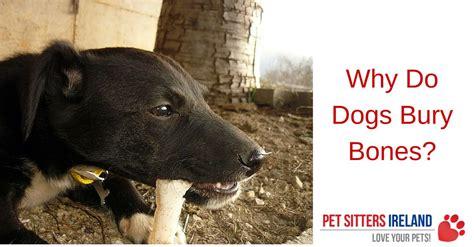 why do dogs bury bones why do dogs bury bones