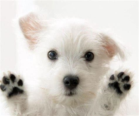 cutest puppy pictures wallpapers wallpaper cave