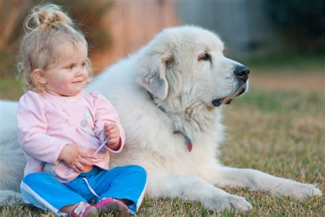 dogs with babies 16 great tips for introducing dogs to new babies american kennel club