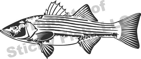 coloring pages rockfish our striped bass decal has great detail and features show