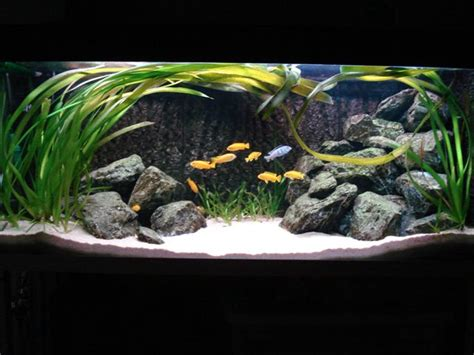 Cichlid Aquascape by Non Scaping For Cichlids Aquascaping World