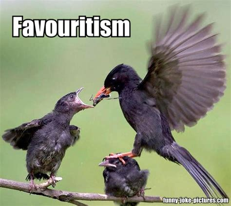 Funny Bird Memes - bird favouritism meme funny joke pictures