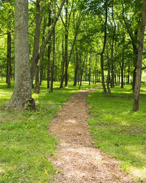 Search On Path Nature Path Driverlayer Search Engine