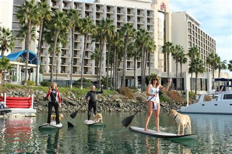 ops paddle board lights sup pups newest addition to our tours a paddle board