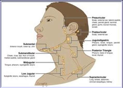 diagram of lymph nodes in neck thoracic inlet